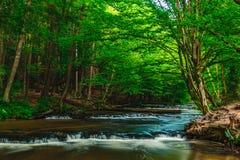 Cascade sur la rivière de Tanew en Pologne Image libre de droits