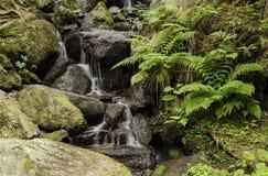 Cascade sur une rivière de montagne dans la cascade de la forêt 10 sur une rivière de montagne dans la forêt images stock