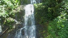Cascade tropicale dans la forêt - Brésil, corupa, Santa Catarina banque de vidéos