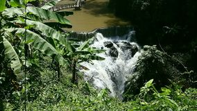 Cascade Waterfall with palm leaves in front of stock video footage