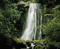 Cascade waterfall in rainforest Stock Image