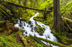 Cascade waterfalls in Oregon forest hike trail Royalty Free Stock Image