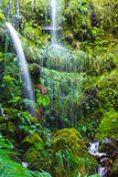 Cascade. In the wild Laural Forest of Madeira Portugal Stock Photos