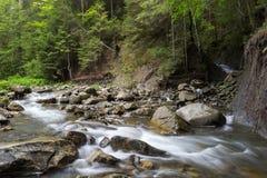 Cascadedalingen over oude pruimrivier met rotsen in het bos royalty-vrije stock foto's