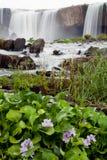 Cascades à écriture ligne par ligne Images stock