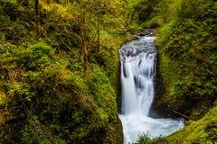Cascades à écriture ligne par ligne dans la forêt Image libre de droits