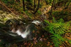 Cascades à écriture ligne par ligne dans la forêt Photographie stock