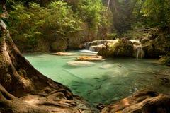 cascades à écriture ligne par ligne tropicales de jungle Image stock