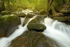 Cascades avec la roche dans la forêt Photographie stock