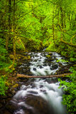 Cascades on Bridal Veil Creek in the Columbia River Gorge  Royalty Free Stock Photography