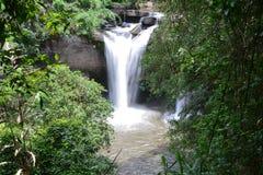 Cascades dans la jungle Photo stock