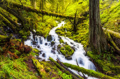 Cascades de cascade dans la traînée de hausse de forêt de l'Orégon images stock
