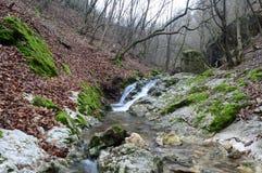 Cascades de crique de forêt Photos libres de droits