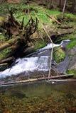 Cascades de l'eau sur la rivière de Bila Opava Photographie stock libre de droits