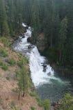 Cascades de lac Shasta Photos libres de droits