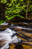Cascades in Kitchen Creek and a low-hanging dogwood branch Stock Images