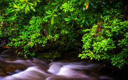 Cascades on Mingus Creek, at Great Smoky Mountains National Park Stock Image