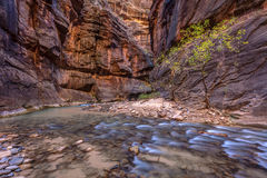 Cascades in the Narrows of Zion Royalty Free Stock Image
