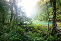 Cascades National Park in Guatemala Semuc Champey at sunset. stock photography
