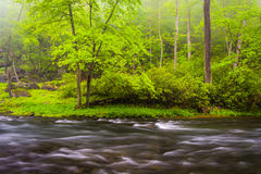 Cascades op de Buskruitrivier, dichtbij Prettyboy-Reservoir in Bal Royalty-vrije Stock Foto