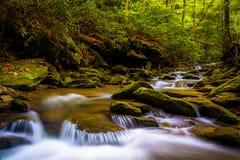 Cascades op een stroom in een weelderig bos in Holtwood, Pennsylvania royalty-vrije stock foto's