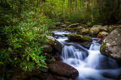 Cascades on Roaring Fork, in Great Smoky Mountains National Park Royalty Free Stock Image