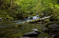 Cascades in a rocky stream. Cascades through alders on a tranquil stream Royalty Free Stock Photography