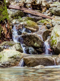 Cascades on small Creek in the forest. Small creek in the rain forest British Columbia Canada near North Vancouver Stock Image