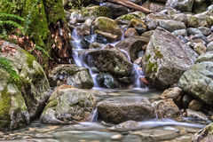 Cascades on small Creek in the forest. Small creek in the rain forest British Columbia Canada near North Vancouver Royalty Free Stock Photo
