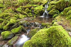 Cascades and small pools in a stream. Royalty Free Stock Photo