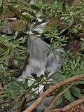 Cascades on Stone Mountain Creek in North Carolina. Water cascades over rocks behind the rhododendron creating small falls along Stone Mountain Creek in Stone Royalty Free Stock Photography