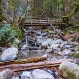 Cascades sur la petite crique dans la forêt Photos libres de droits