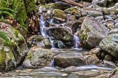 Cascades sur la petite crique dans la forêt Photo libre de droits