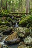 Cascades sur la petite crique dans la forêt Image stock