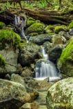 Cascades sur la petite crique dans la forêt Photos stock
