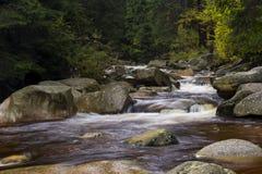 Cascades sur la rivière dans la forêt image libre de droits