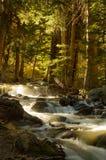 Cascades sur le courant dans la forêt Photo libre de droits