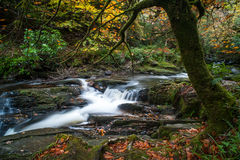 cascading autumn forest stream Royalty Free Stock Photo