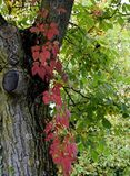 Cascading Autumn leaves Royalty Free Stock Image