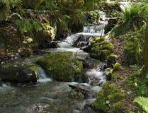 Cascading creek in Bridal Veil Falls Provincial Park. A cascading forest creek in Bridal Veil Falls Provincial Park, British Colombia, Canada stock photo