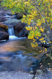 Cascading creek during the fall season. Samll cascades of water flow over the rocks and the trees start turning yellow for the fall season stock photos