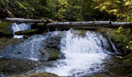 Cascading falls over mossy rocks. Small falls through mossy rocks in a moist coniferous forest Royalty Free Stock Photo