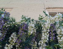 Cascading flowers in front of older brick building. These white and purple flowers cascade from a planter box in front of a historic brick building Royalty Free Stock Images
