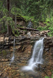 Cascading forest stream in Colorado mountains Royalty Free Stock Image