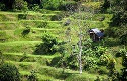 Cascading hill slope. A cascading hill slope in Bali, Indonesia stock image