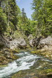 Cascading mountain stream Stock Photos