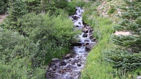 Cascading Mountain Stream Tumbles Through Wildflowers and Pine Trees stock video footage