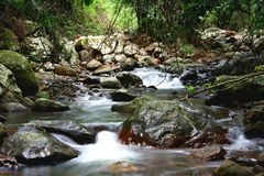Cascading Stream. A stream softly cascading over smooth rocks in the Gold Coast Hinterland Royalty Free Stock Image