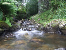 Cascading Stream. Fast flowing river meandering and tumbling thou rocks and boulders ,trees and ferns  lining the banks of the river Royalty Free Stock Photo