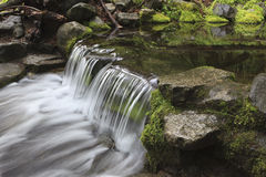 Cascading stream in a California forest Stock Images